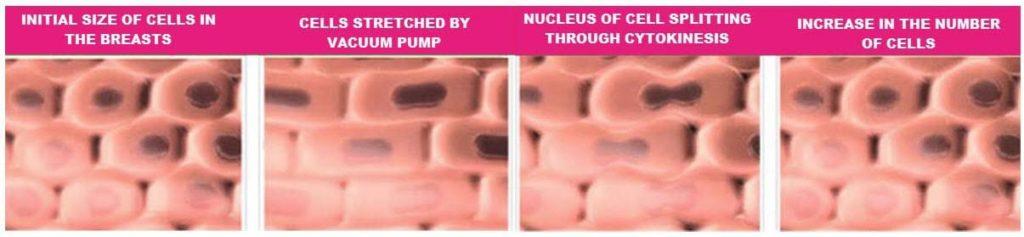 cell multiplication breast enlargement
