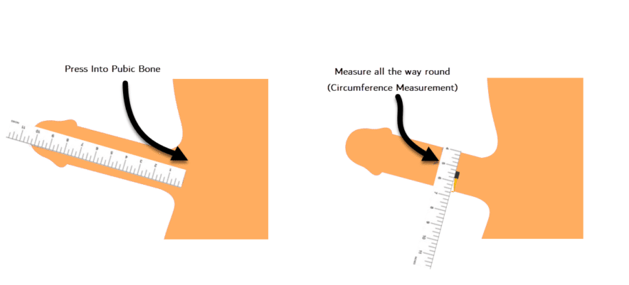 My penis size calculate Circumference, diameter,